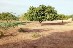 Terrain de 62 241  m² à Saponé àusage de ferme agropastorale.
