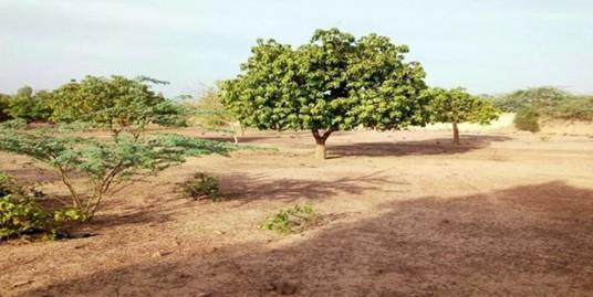 Terrain de 62 241  m² dans la commune de Saponé